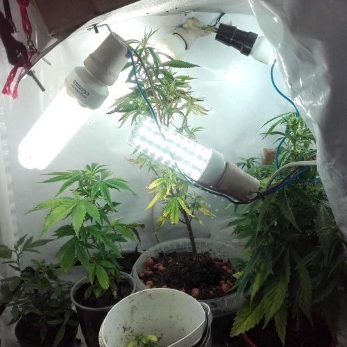 Policjanci zabezpieczyli blisko 37 tysięcy nielegalnych papierosów udaremniając ich dalszą sprzedaż